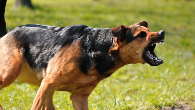 dog who caused dog bite lawsuit