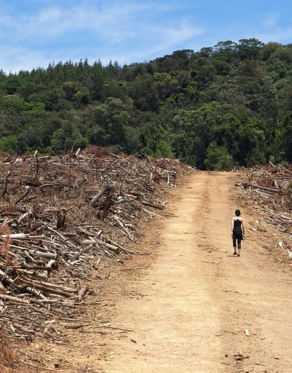 Woman walking through an area of deforestation