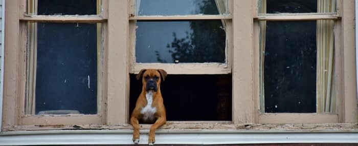 dog sitting looking out window following behavior training tips