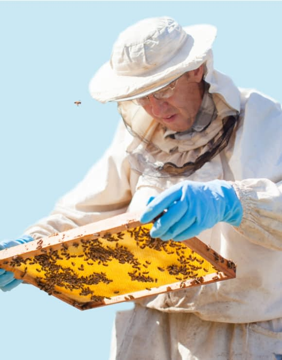 Bee keeper looking at tray of bees