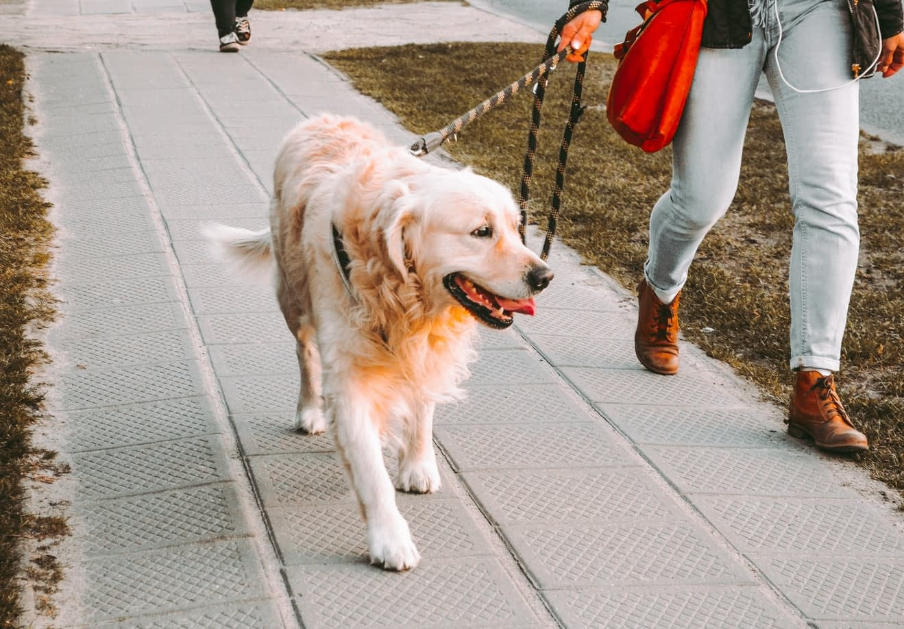 dog walking on leash with owner