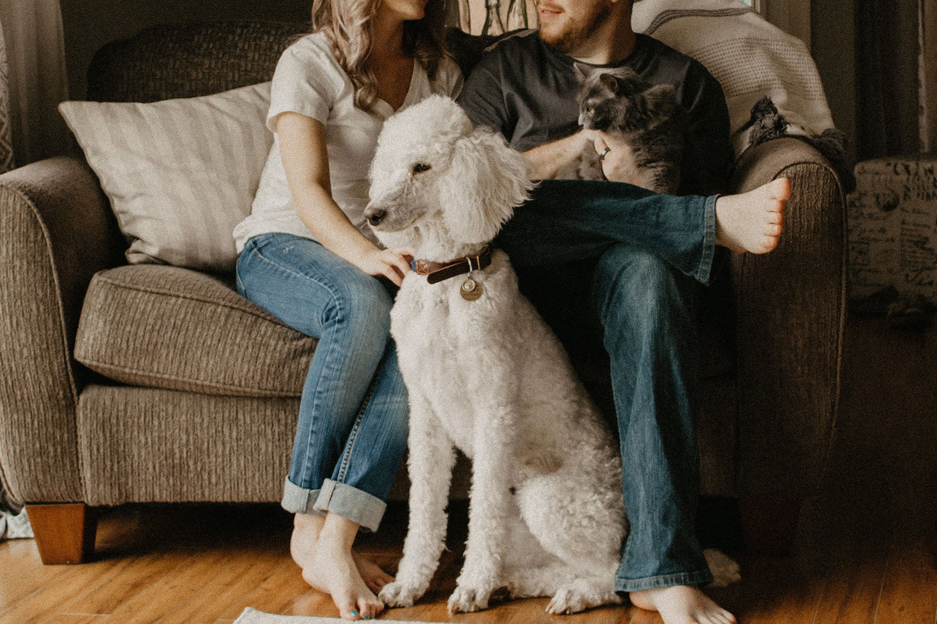 pets sitting on couch with their owner