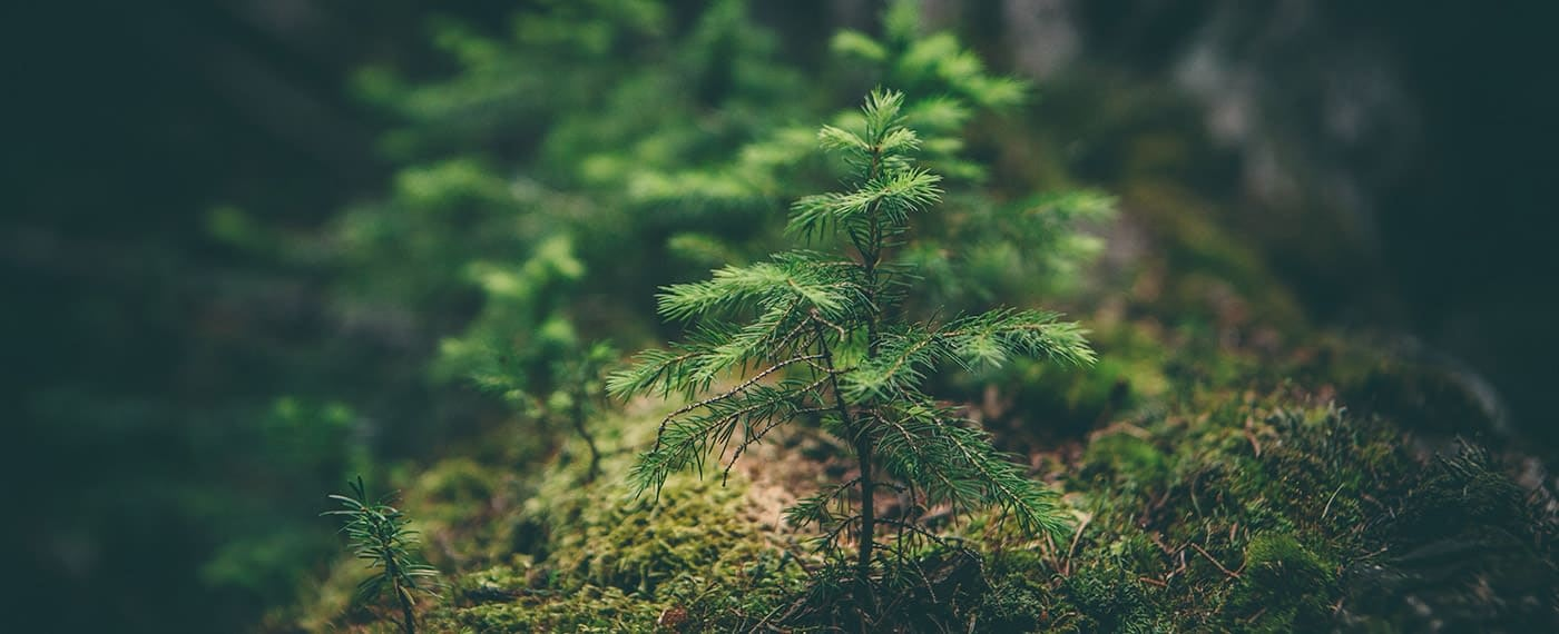 A small fern tree beginning to grow in forest environment