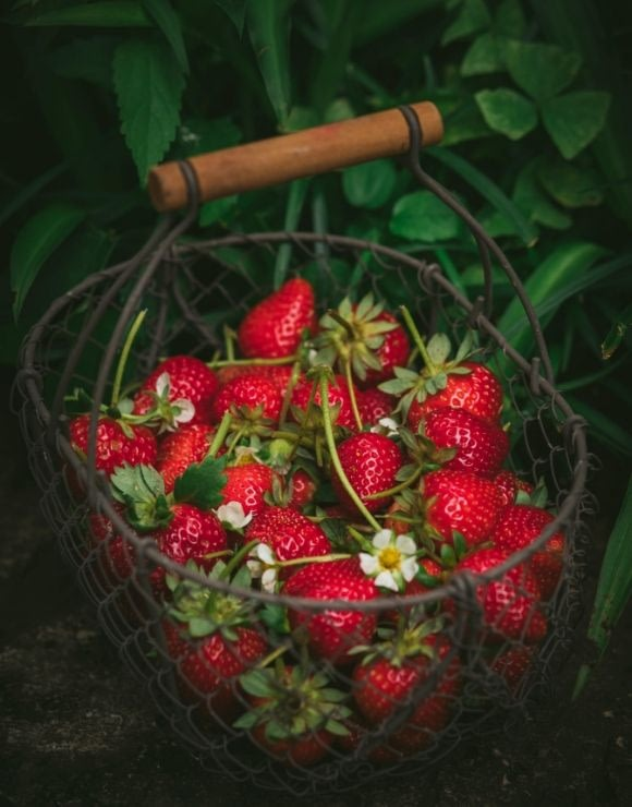 A basket of strawberries filled with antioxidants