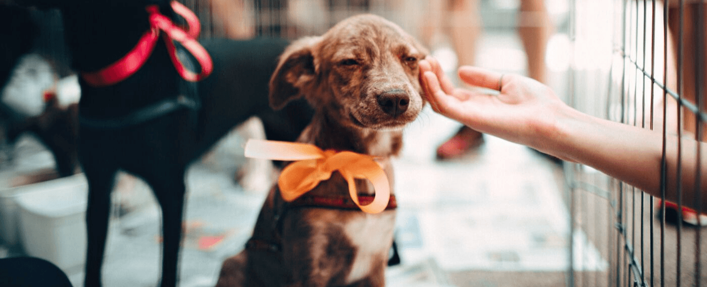 A small dog with an orange bow waiting to be adopted
