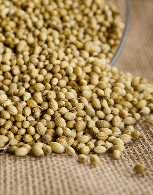 coriander seeds flowing from a tipped over glass container