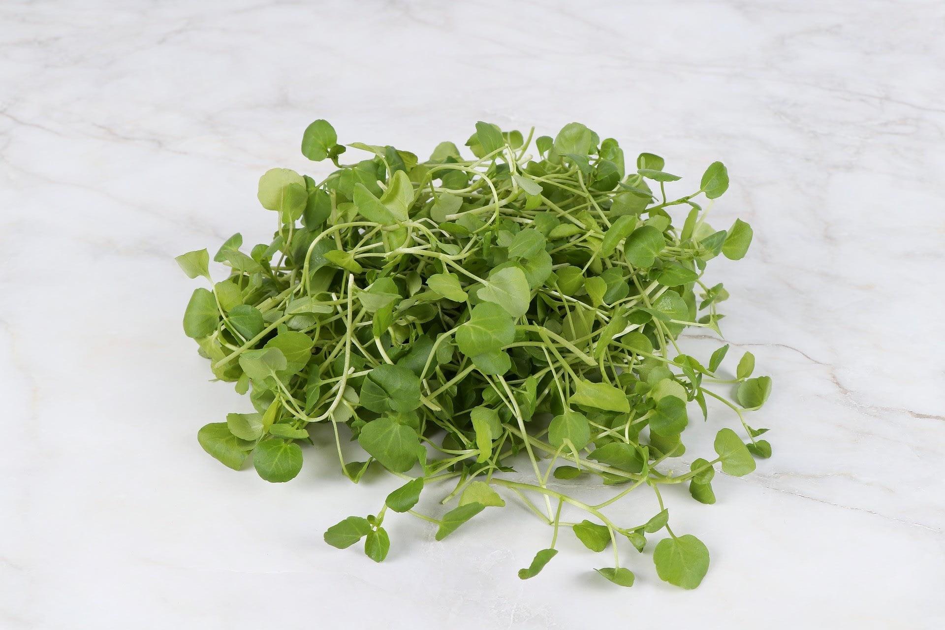 a bundle of watercress greens