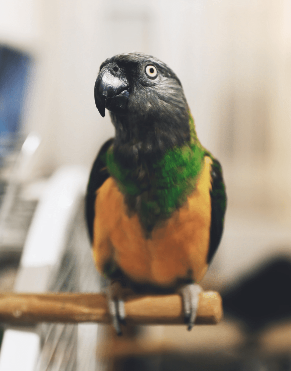 Exotic parrot sitting on the end of a stick