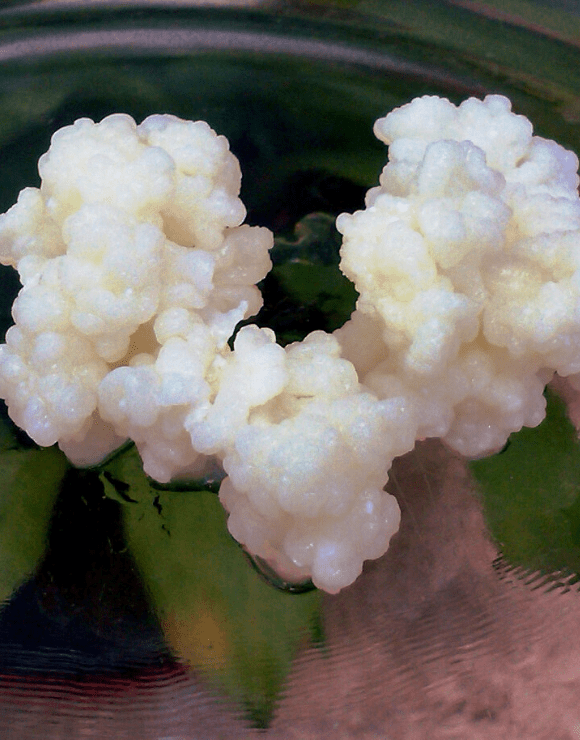 fermented milk known as Kefir