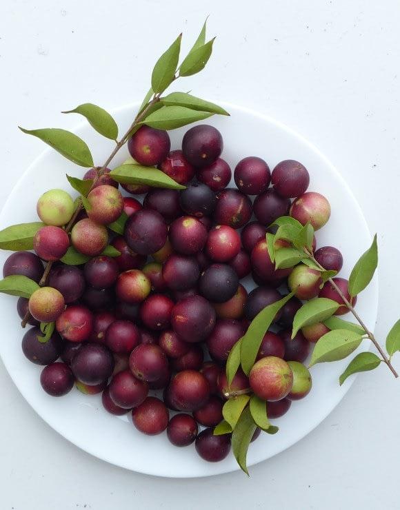 A plate with Camu Camu berries